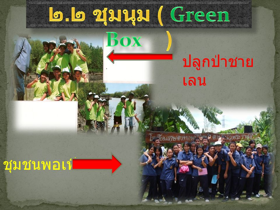 ๒.๒ ชุมนุม ( Green Box ) ปลูกป่าชายเลน ชุมชนพอเพียง