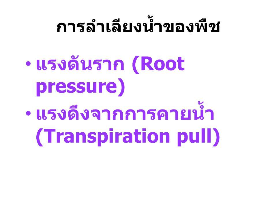 แรงดันราก (Root pressure) แรงดึงจากการคายน้ำ (Transpiration pull)