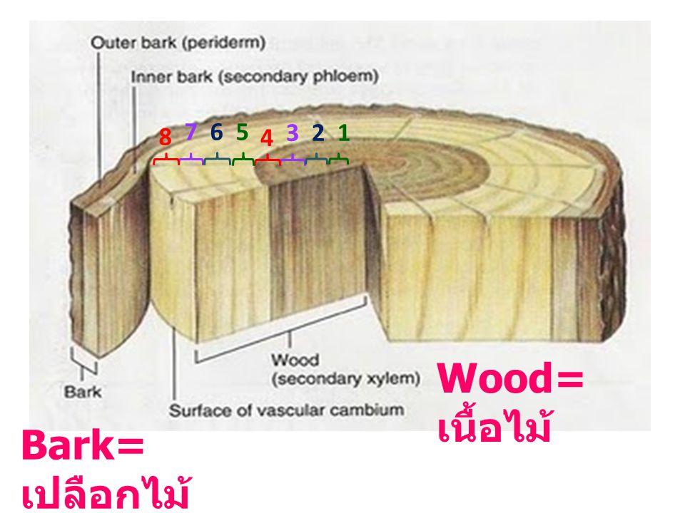7 6 5 8 3 2 1 4 Wood=เนื้อไม้ Bark=เปลือกไม้