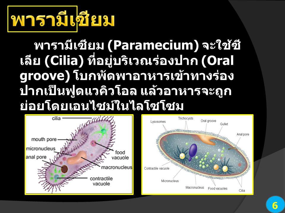พารามีเซียม