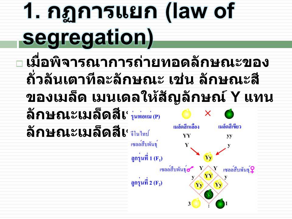 1. กฏการแยก (law of segregation)