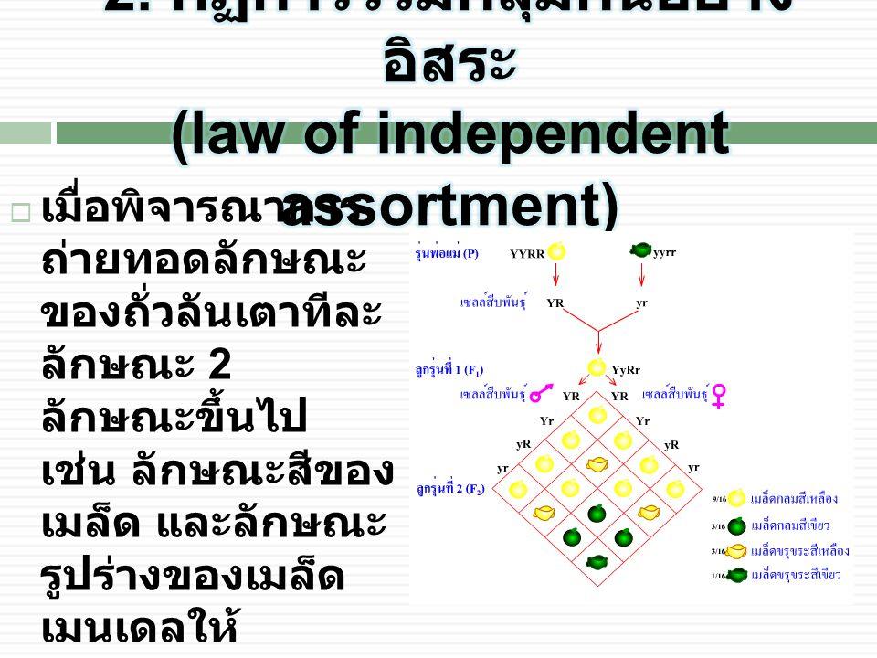 2. กฏการรวมกลุ่มกันอย่างอิสระ (law of independent assortment)