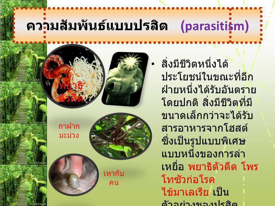 ความสัมพันธ์แบบปรสิต (parasitism)