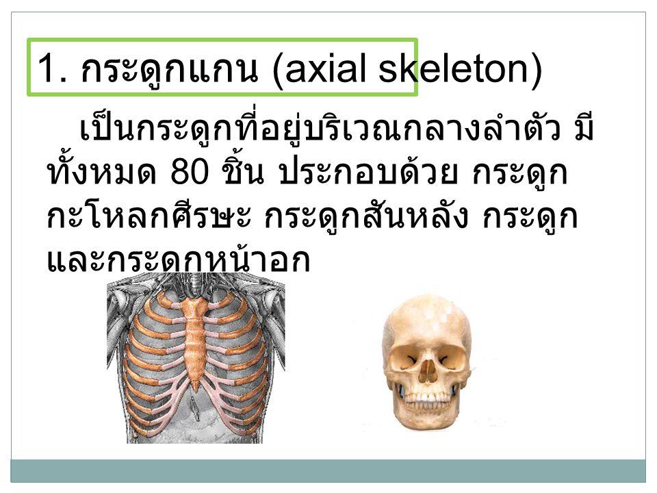 1. กระดูกแกน (axial skeleton)