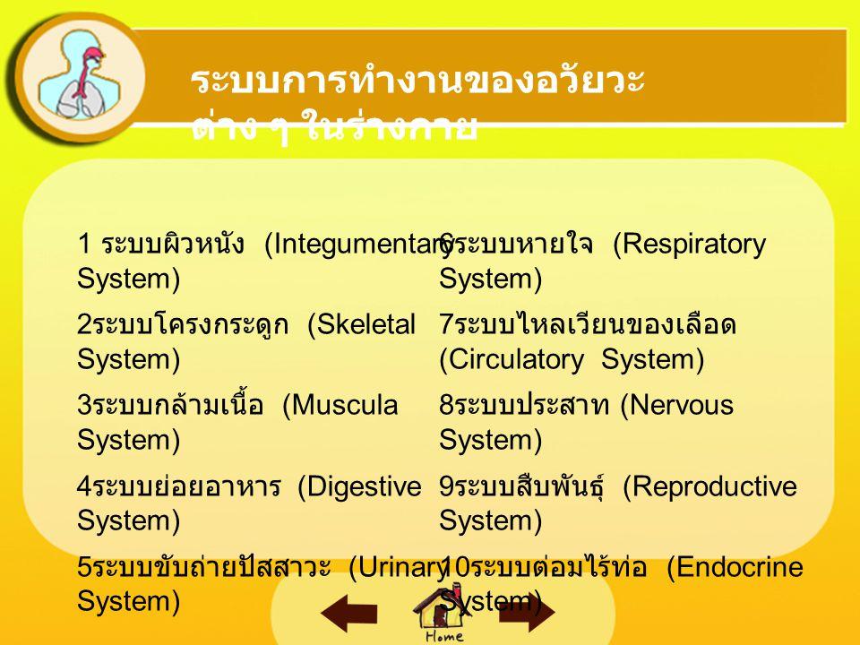 ระบบการทำงานของอวัยวะต่าง ๆ ในร่างกาย
