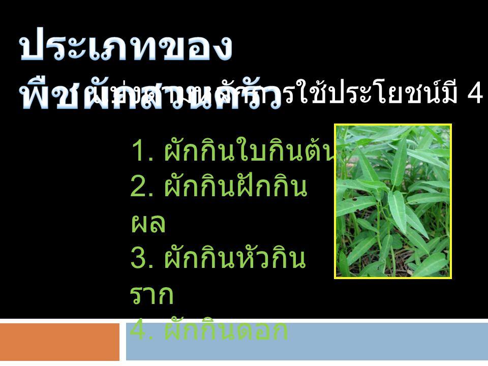 ประเภทของพืชผักสวนครัว