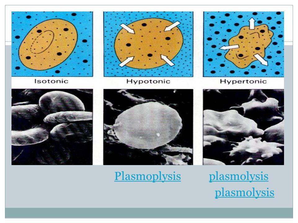 Plasmoplysis plasmolysis