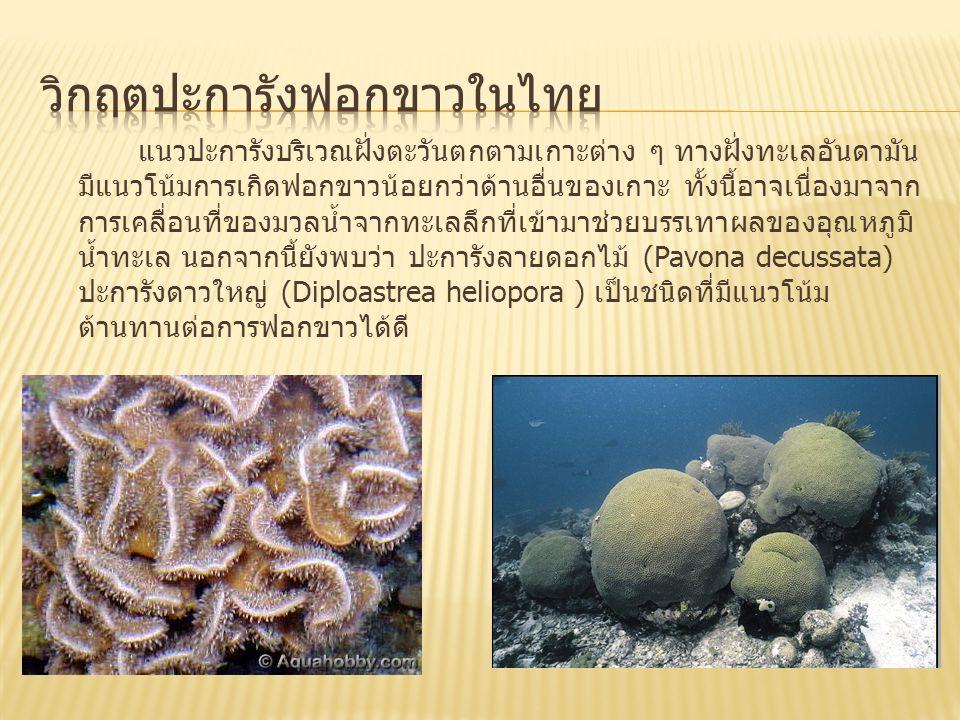 วิกฤตปะการังฟอกขาวในไทย