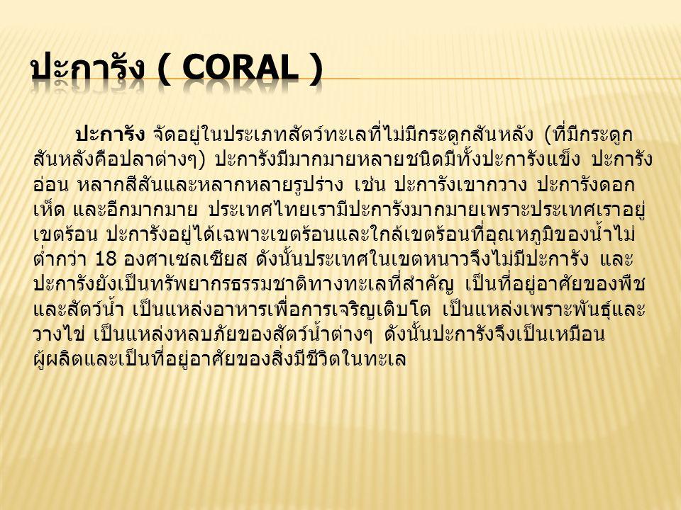 ปะการัง ( Coral )