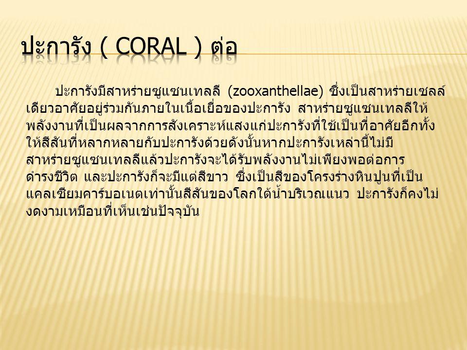 ปะการัง ( Coral ) ต่อ