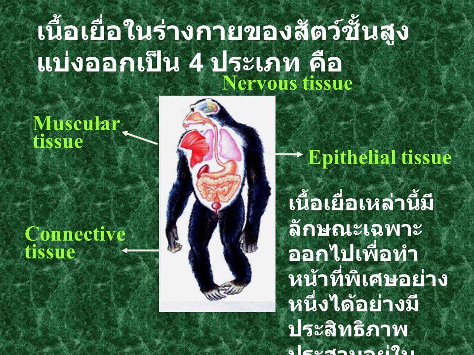 เนื้อเยื่อในร่างกายของสัตว์ชั้นสูง แบ่งออกเป็น 4 ประเภท คือ