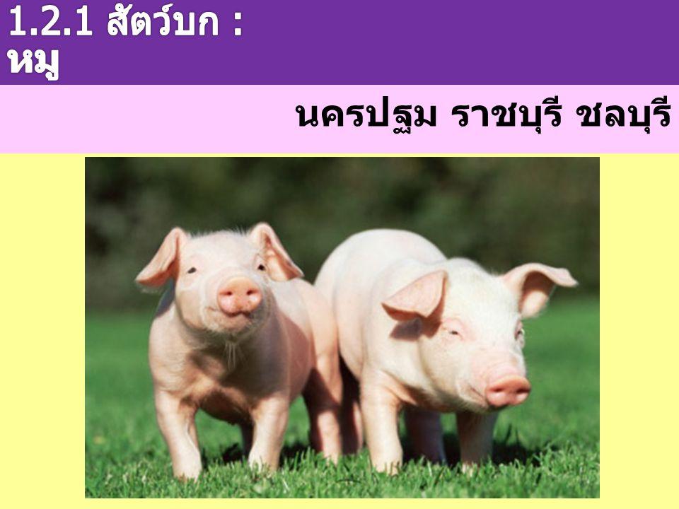 1.2.1 สัตว์บก : หมู นครปฐม ราชบุรี ชลบุรี