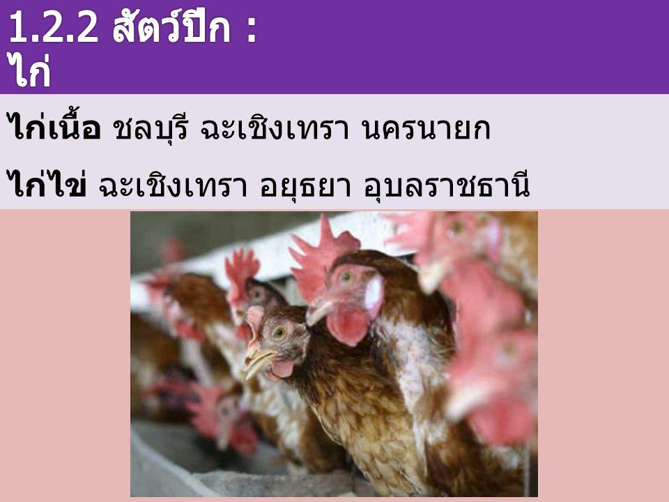 1.2.2 สัตว์ปีก : ไก่ ไก่เนื้อ ชลบุรี ฉะเชิงเทรา นครนายก