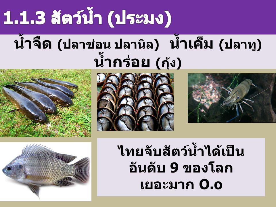 1.1.3 สัตว์น้ำ (ประมง) น้ำจืด (ปลาช่อน ปลานิล) น้ำเค็ม (ปลาทู) น้ำกร่อย (กุ้ง) ไทยจับสัตว์น้ำได้เป็นอันดับ 9 ของโลก.