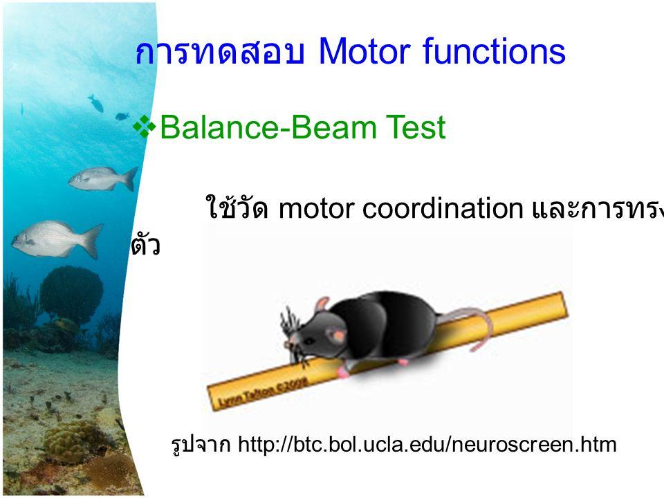 การทดสอบ Motor functions
