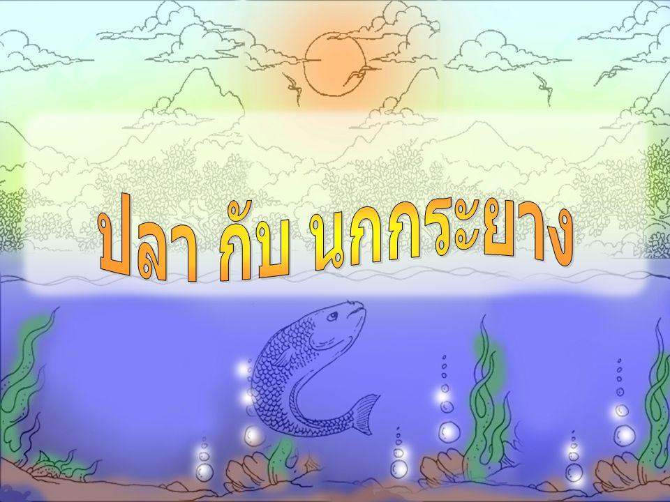 ปลา กับ นกกระยาง