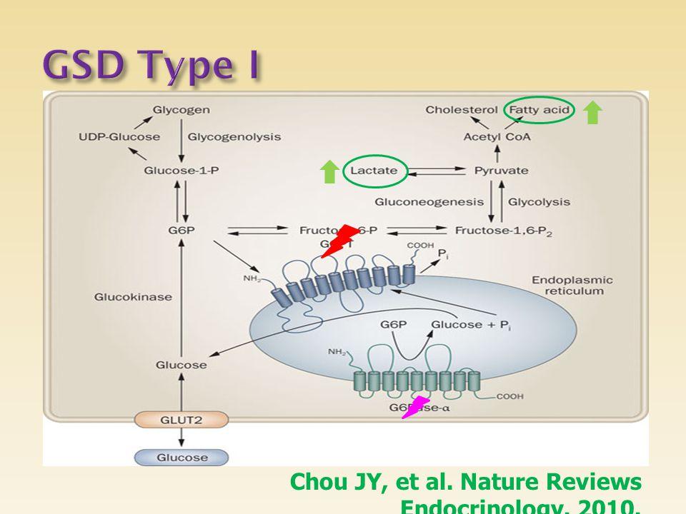 GSD Type I Chou JY, et al. Nature Reviews Endocrinology. 2010.