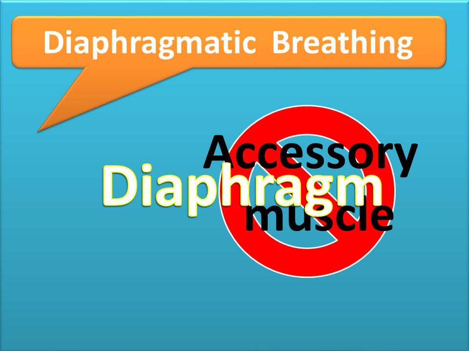 tr Diaphragmatic Breathing Accessory muscle Diaphragm