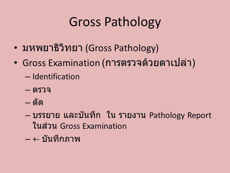 Gross Pathology มหพยาธิวิทยา (Gross Pathology)