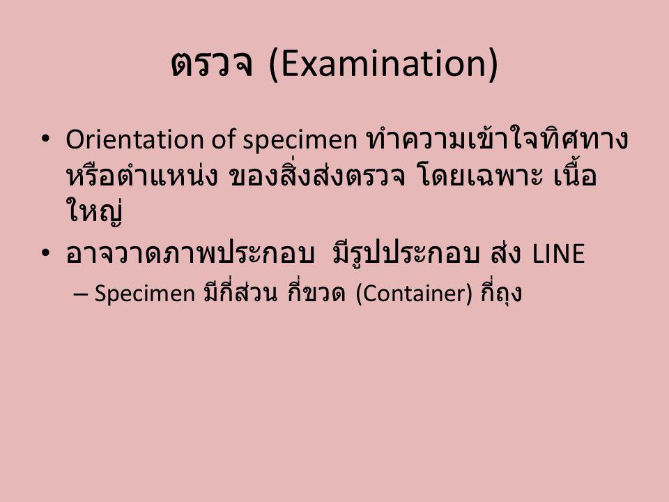 ตรวจ (Examination) Orientation of specimen ทำความเข้าใจทิศทางหรือตำแหน่ง ของสิ่งส่งตรวจ โดยเฉพาะ เนื้อใหญ่