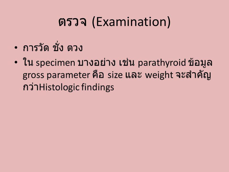 ตรวจ (Examination) การวัด ชั่ง ตวง