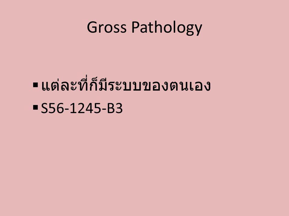 Gross Pathology แต่ละที่ก็มีระบบของตนเอง S56-1245-B3