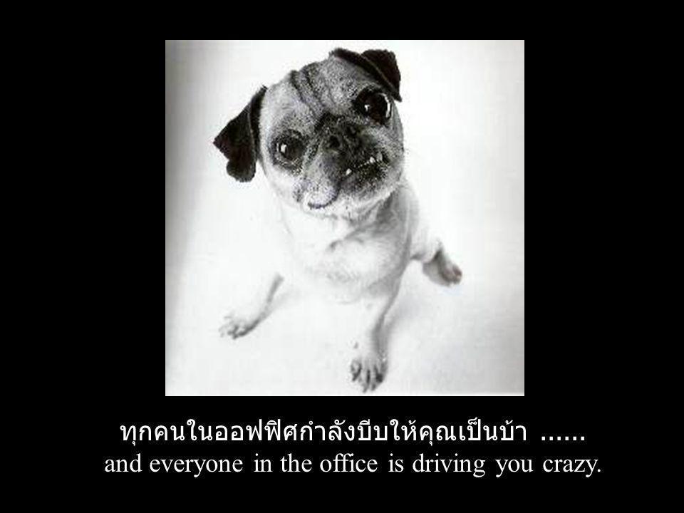 ทุกคนในออฟฟิศกำลังบีบให้คุณเป็นบ้า ......