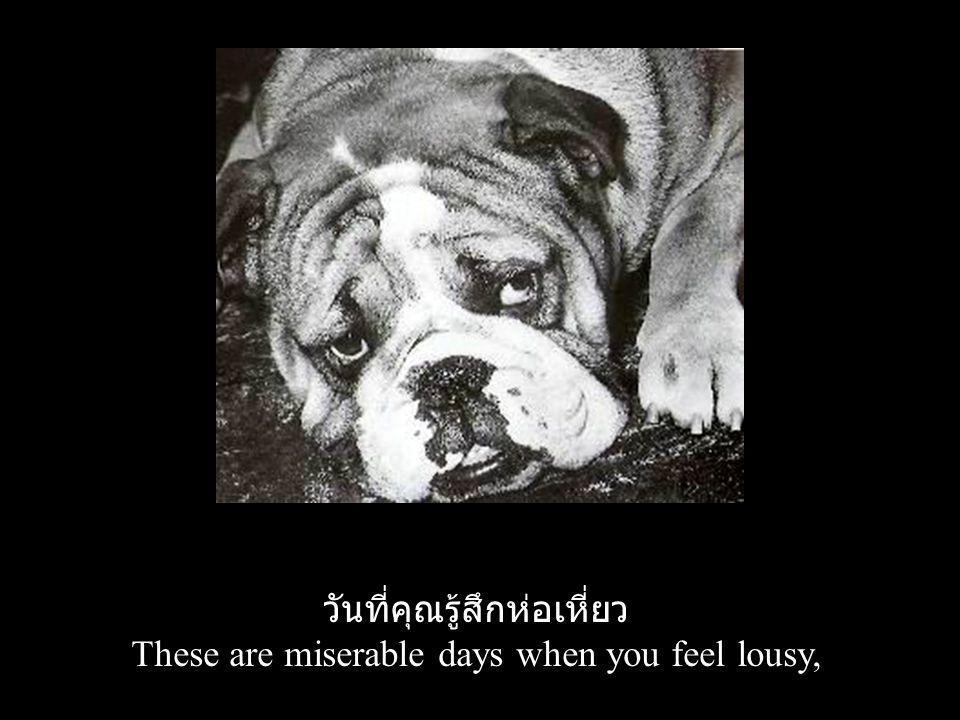วันที่คุณรู้สึกห่อเหี่ยว These are miserable days when you feel lousy,