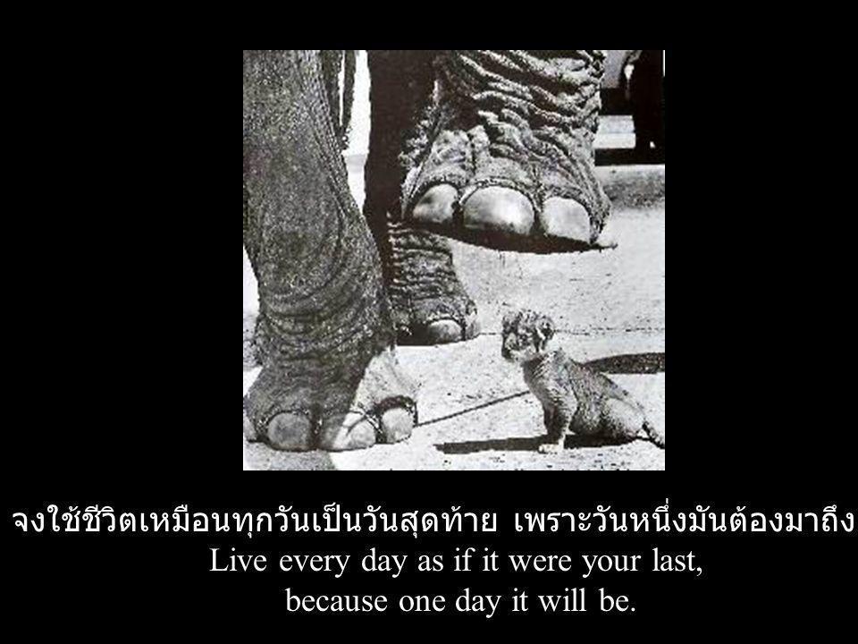 จงใช้ชีวิตเหมือนทุกวันเป็นวันสุดท้าย เพราะวันหนึ่งมันต้องมาถึงแน่ๆ