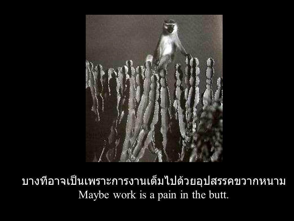 บางทีอาจเป็นเพราะการงานเต็มไปด้วยอุปสรรคขวากหนาม