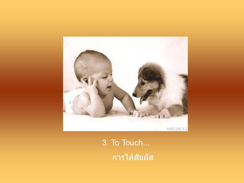 3. To Touch... การได้สัมผัส