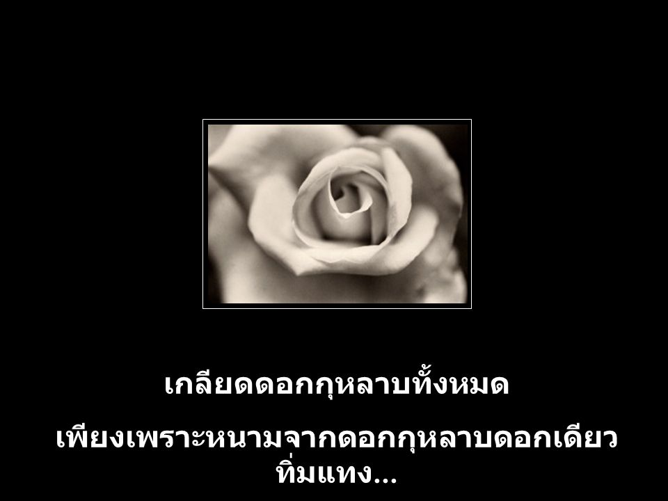 เกลียดดอกกุหลาบทั้งหมด