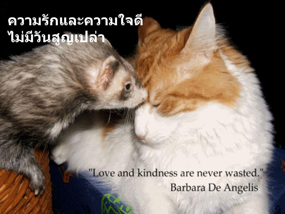 ความรักและความใจดี ไม่มีวันสูญเปล่า