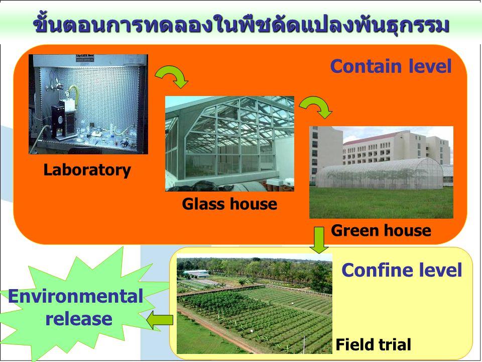 ขั้นตอนการทดลองในพืชดัดแปลงพันธุกรรม