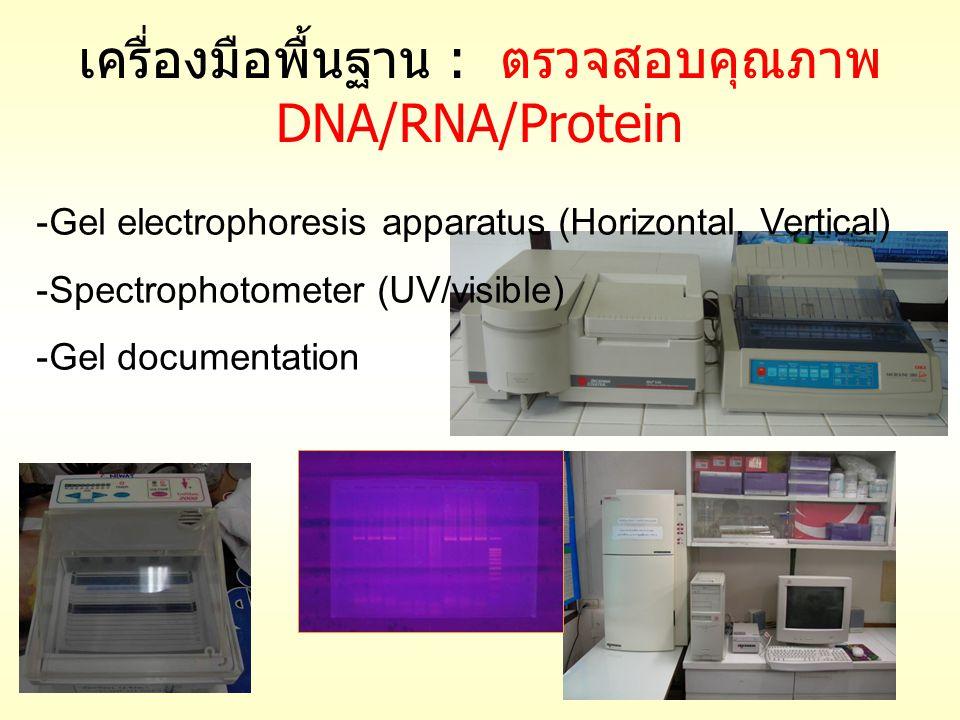 เครื่องมือพื้นฐาน : ตรวจสอบคุณภาพ DNA/RNA/Protein