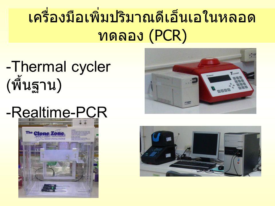 เครื่องมือเพิ่มปริมาณดีเอ็นเอในหลอดทดลอง (PCR)