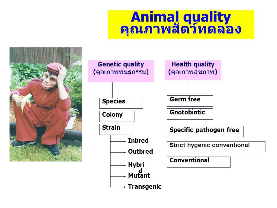 Animal quality คุณภาพสัตว์ทดลอง