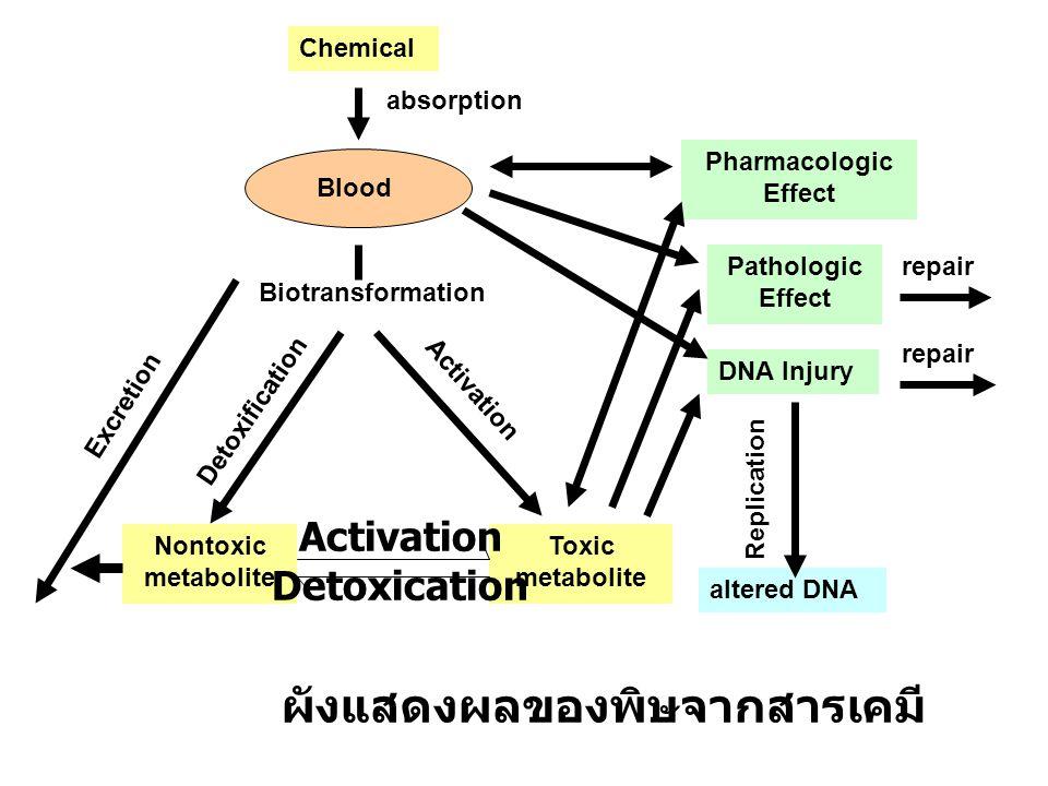 ผังแสดงผลของพิษจากสารเคมี