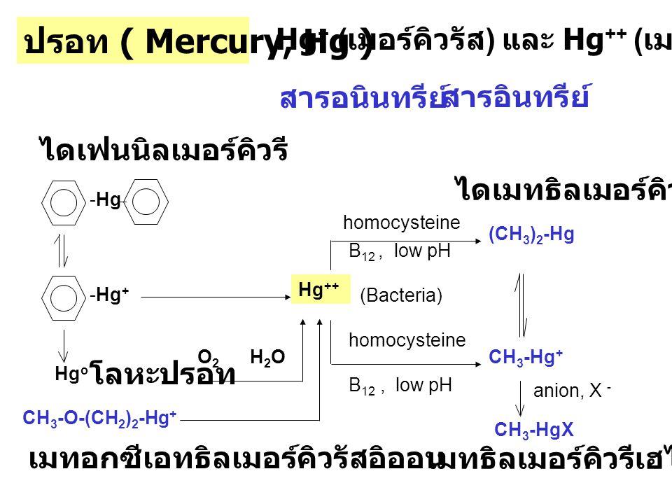 ปรอท ( Mercury, Hg ) Hg+ (เมอร์คิวรัส) และ Hg++ (เมอร์คิวริก)