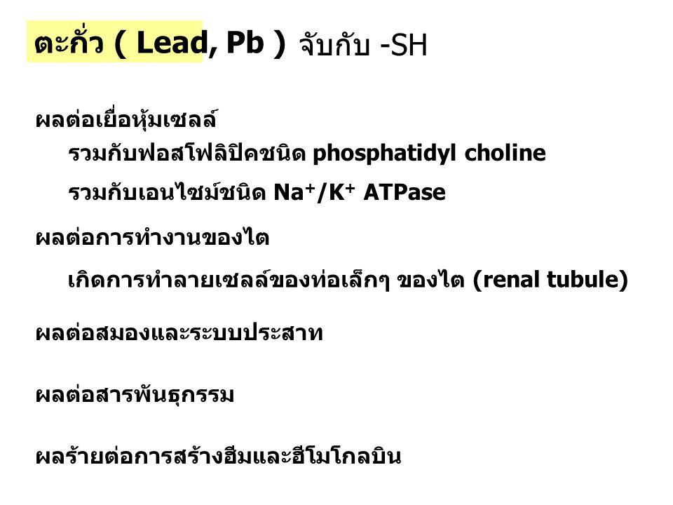 ตะกั่ว ( Lead, Pb ) จับกับ -SH ผลต่อเยื่อหุ้มเซลล์