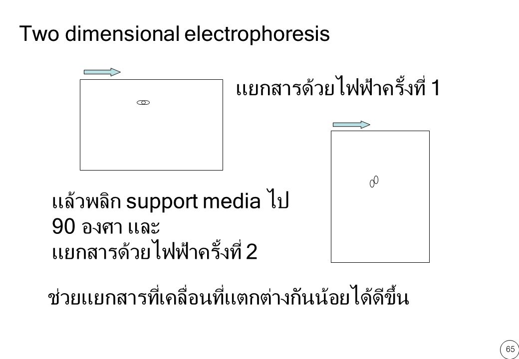 Two dimensional electrophoresis