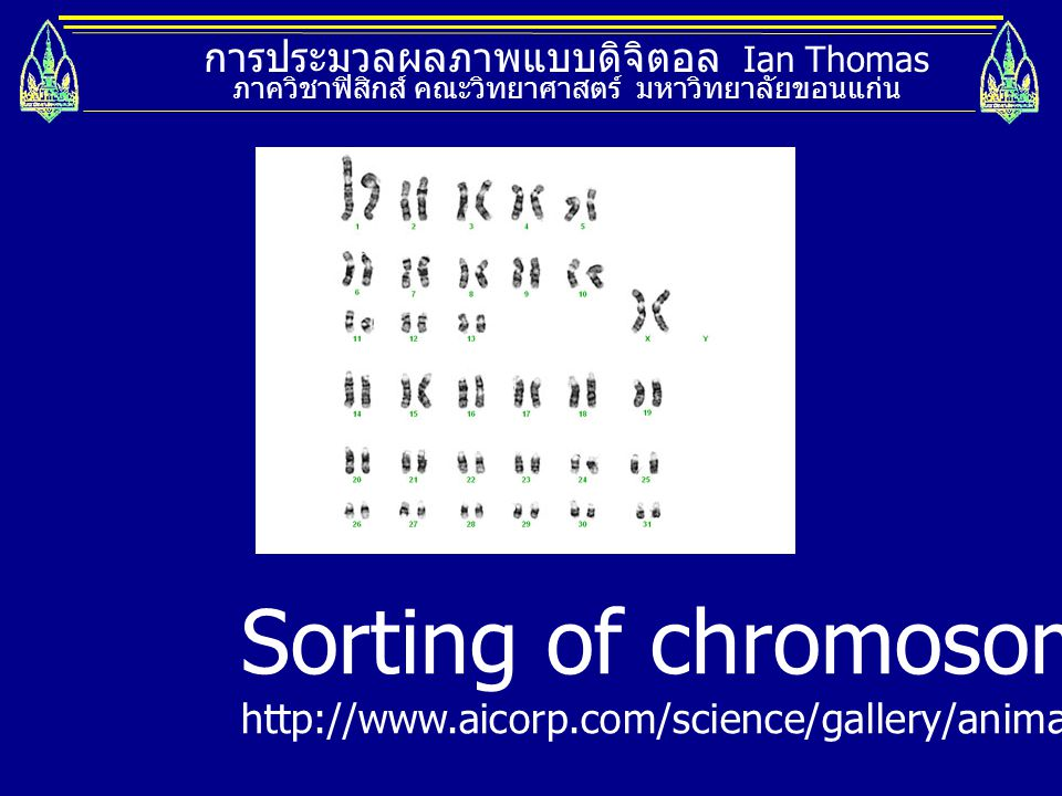 Sorting of chromosomes