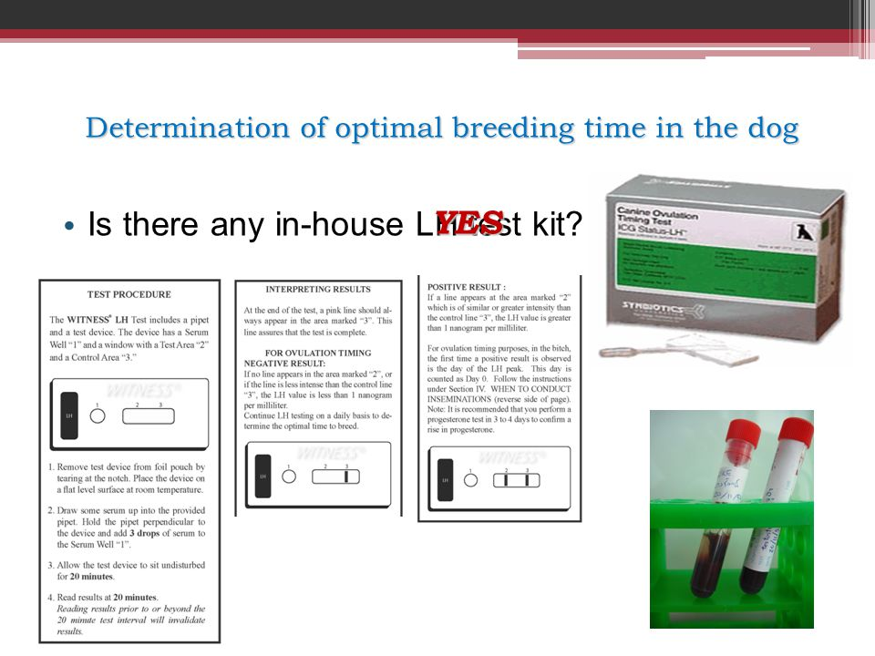 Determination of optimal breeding time in the dog