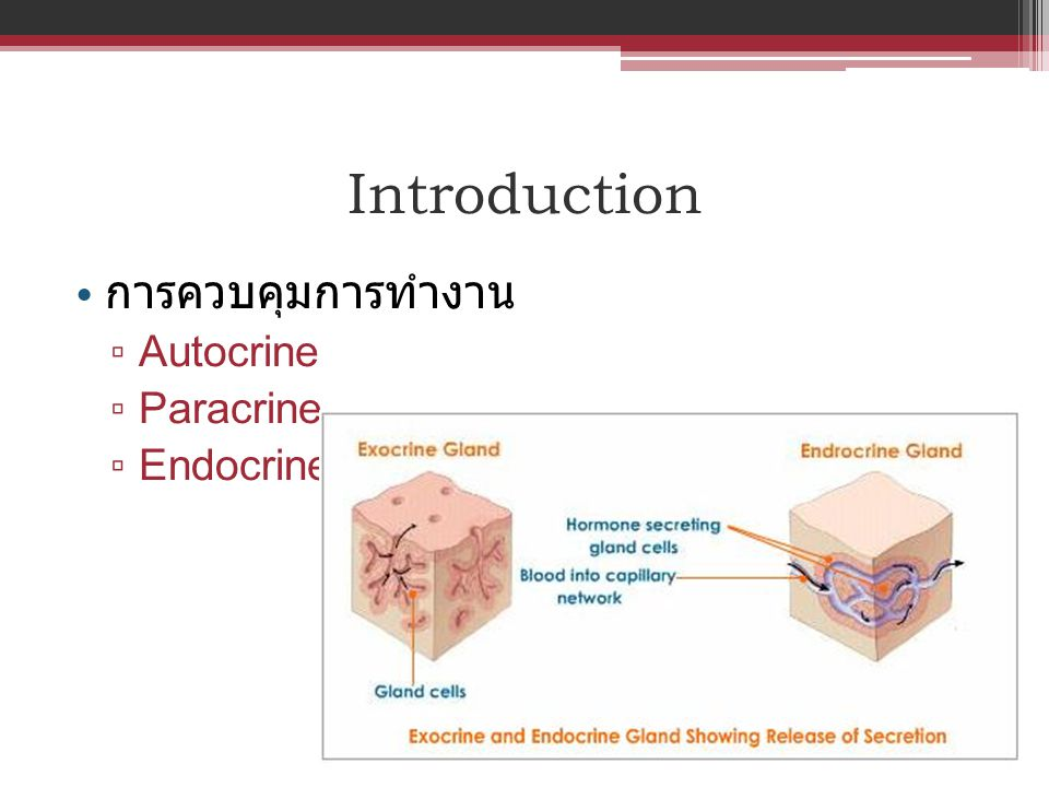 Introduction การควบคุมการทำงาน Autocrine Paracrine Endocrine