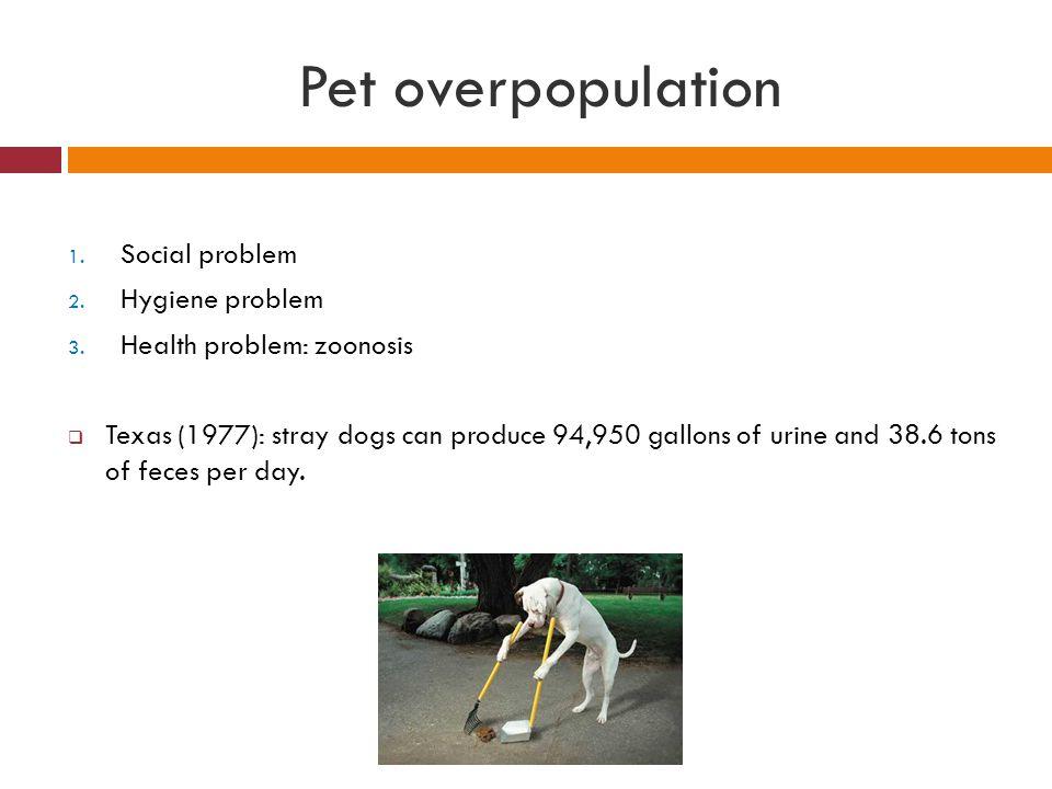 Pet overpopulation Social problem Hygiene problem