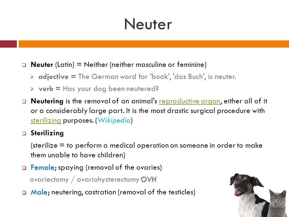 Neuter Neuter (Latin) = Neither (neither masculine or feminine)
