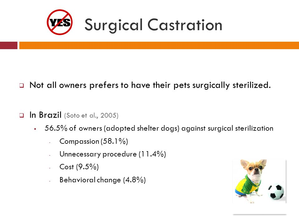 Surgical Castration Not all owners prefers to have their pets surgically sterilized. In Brazil (Soto et al., 2005)