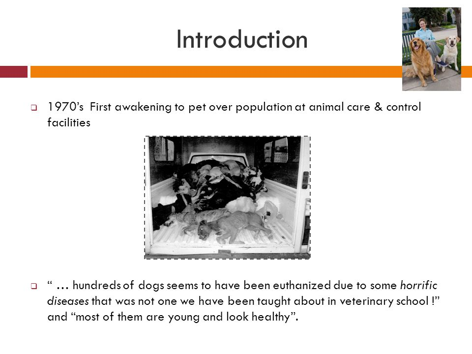 Introduction 1970's First awakening to pet over population at animal care & control facilities.