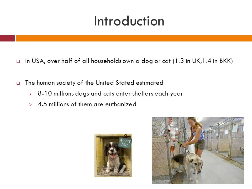 Introduction In USA, over half of all households own a dog or cat (1:3 in UK,1:4 in BKK) The human society of the United Stated estimated.