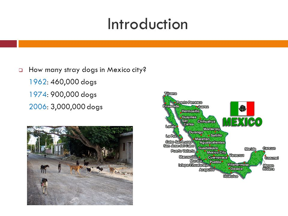 Introduction How many stray dogs in Mexico city 1962: 460,000 dogs